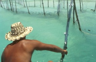 Toau_fisherman