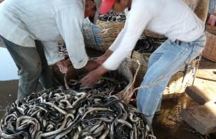 Cambodia fish market