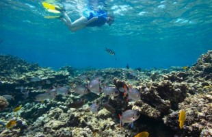 Seychelles_Ste.-Anne-Marine-National-Park