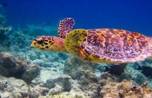 Seychelles l-Parc-marin-de-Sainte-Anne