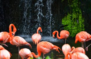 Jurong bird park by Derrick See